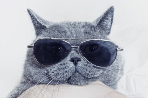 A cat enjoying their holiday in sunglasses