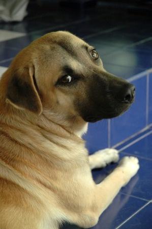 A dog looks anxious
