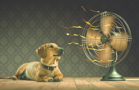 Knowing how to cool down your pet is essential in the hot summer months