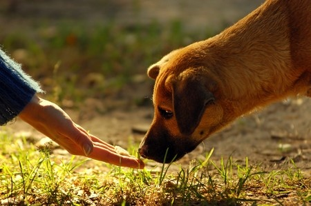 An owner tries to coax their dog not to eat grass