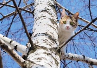 A scared cat in a tree