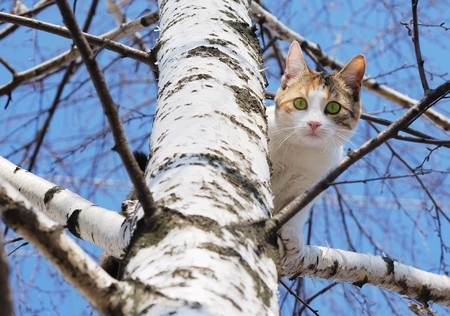 A scared cats sits in a tree