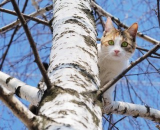 A scared cat up a tree