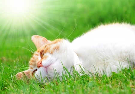 A cat relaxes under the sun