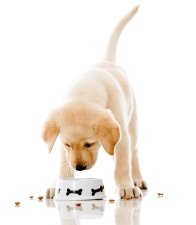 A cute puppy eating some dog food