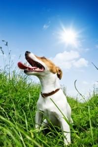A dog basks in the summer sun