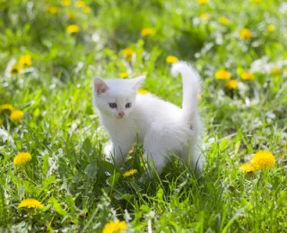 A young kitten plays in a field full of pollen