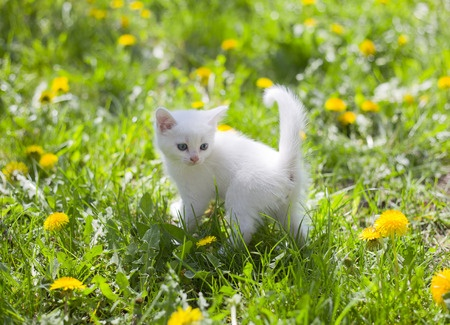 A young kitten plays in afield full of pollen