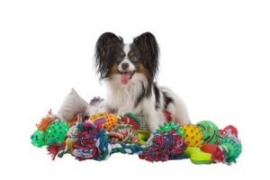 A papillon dog with a mountain of toys