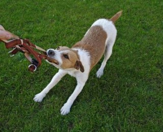 playful dog round-up