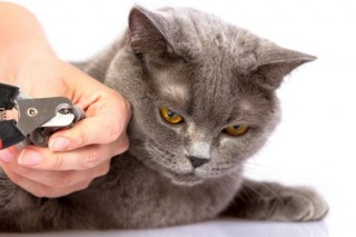 A cat gets its nails clipped