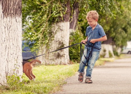 Struggling to walk your stubborn pet can become a thing of the past if you train them properly