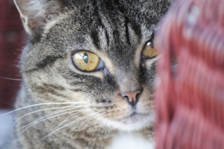 A mature female cat looks on apprehensively