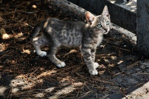 Tips For Searching For Your Lost Pet - Lost Kitten