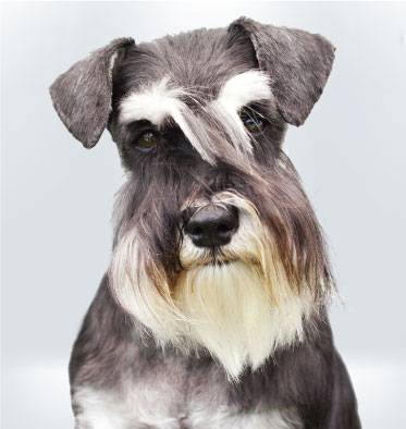 Team Dog | Argos Pet Insurance