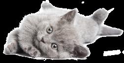 Výsledek obrázku pro kitten png