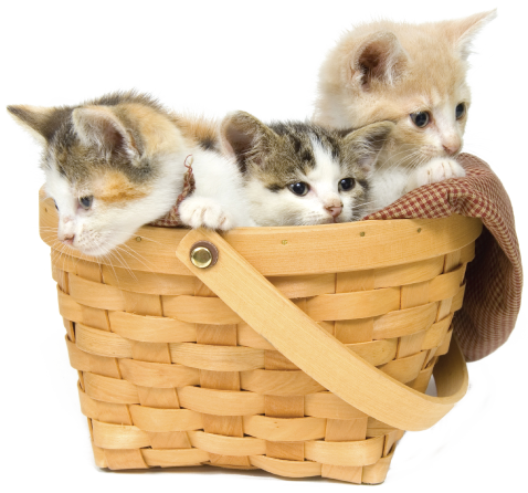 kitten-basket