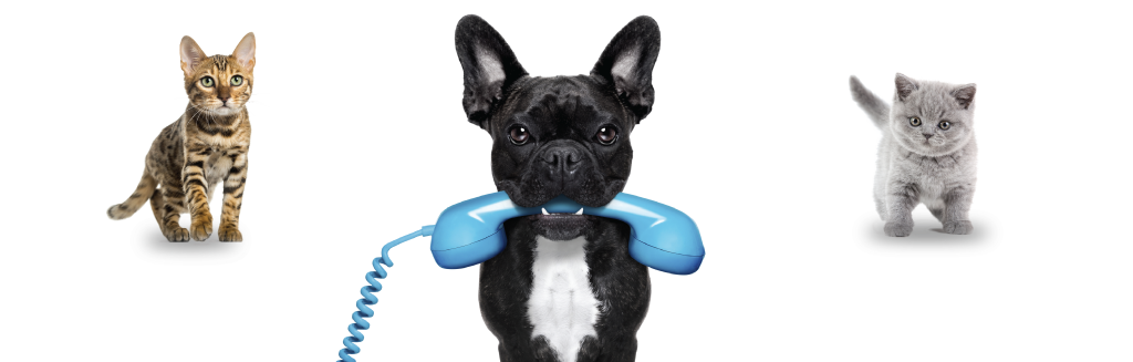 Customer Help provided by RSA | Argos Pet Insurance