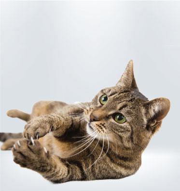 Team Cat | Argos Pet Insurance