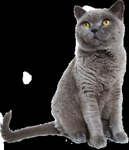 trixie-hero-small-cat