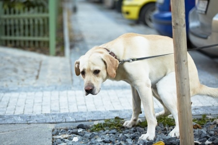Dogs which suffer from constipation may need to see a vet if symptoms persist