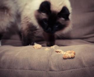 Argos Pet Insurance Blog