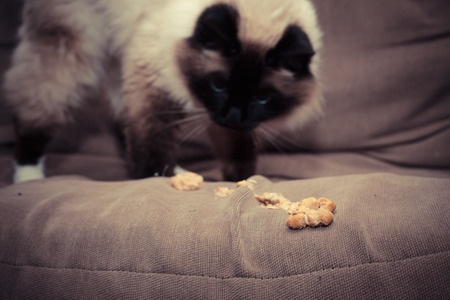 Your cat being sick after eating is usually nothing to worry about, but it could be a sign of an underlying condition.