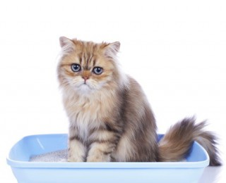 Cat bladder problems may be the sign of an underlying issue. If you spot any symptoms, take your cat to see a vet.