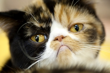 Cat bladder problems cause stress for you and your cat, but most causes are easily treated