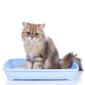 If you spot symptoms of any cat bladder problems, seek advice from a vet as soon as possible