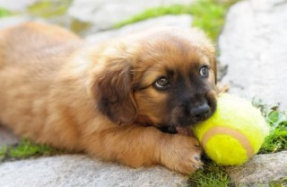 Taking a toy with you on a house visit can help to make your dog feel at home