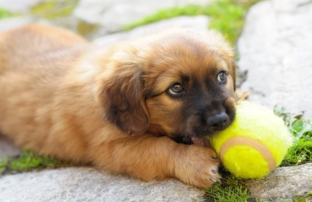 Take treats and toys to keep your dog entertained when visiting someone else's house
