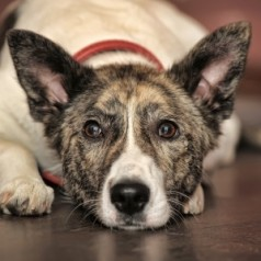 Senior Pet Month: 8 reasons to adopt a dog or cat that's a little bit older
