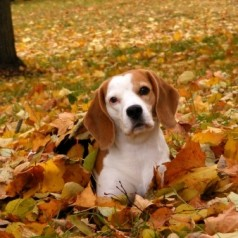 Argos Pet Insurance blog: Review of October
