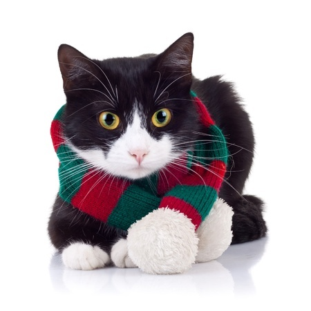 Would your cat like to keep warm with a scarf this winter?