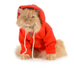 Experimenting with cat clothes can be a fun experience for you and your cat