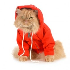 Have fun with Winter fashion essentials for your feline friend