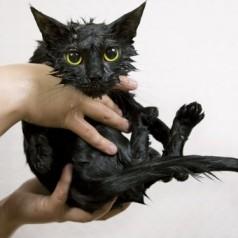 How to avoid cat bath time fails