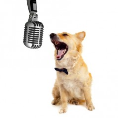 Does your dog have the X Factor?