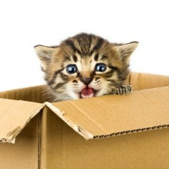 Crazy cats: Kitty quirks explained