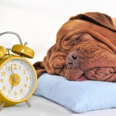 Think ahead and get your dog ready for when the clocks go back an hour