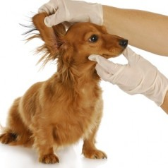 Why you must check your dog for lumps and bumps to spot the signs of dog cancer early