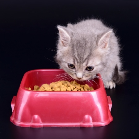 A cute kitten eats its cat food from a plastic bowl