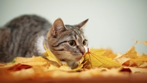 Leaves which fall in Autumn can prove poisonous to cats