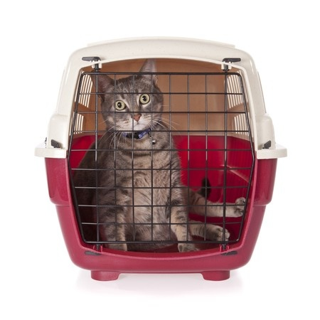 Your cats may not always enjoy being taken on a journey