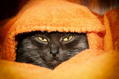 Cats like to be kept warm in winter