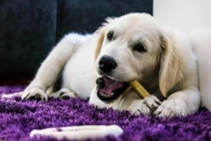 Treat your pet to a chew or toy on World Animal Day