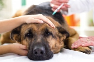 Dogs of all ages should undergo regular examinations