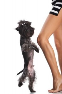 Teach your dog dancing and have some playful fun together