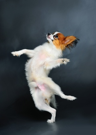 Some dogs love to dance and have fun